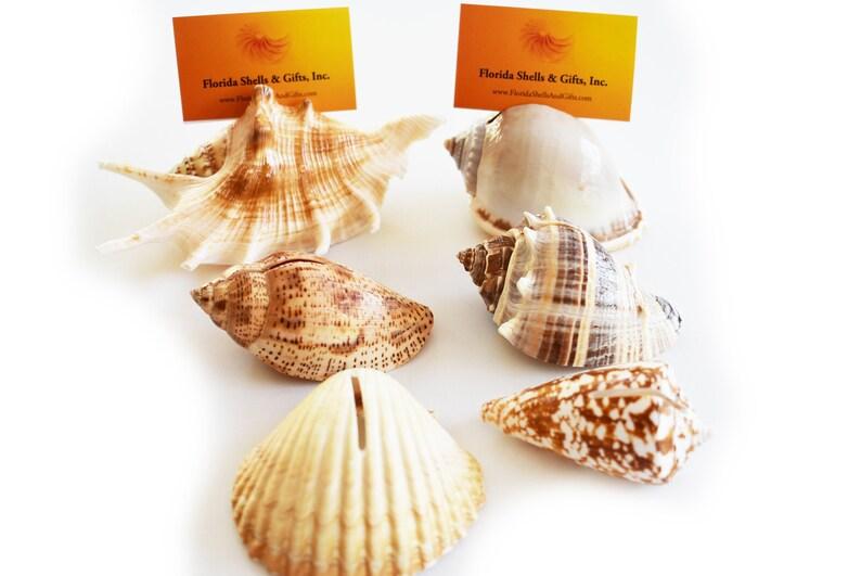 Beach Theme Conch Sea Shell Decors Wedding Bridal Favor Party Event Bulk Lot