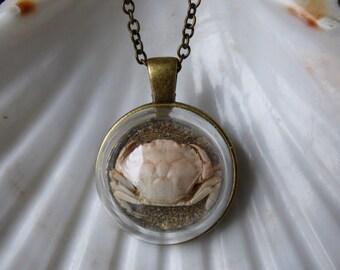 Real crab necklace, crab terrarium, crab pendant, vintage style necklace, beach dome necklace