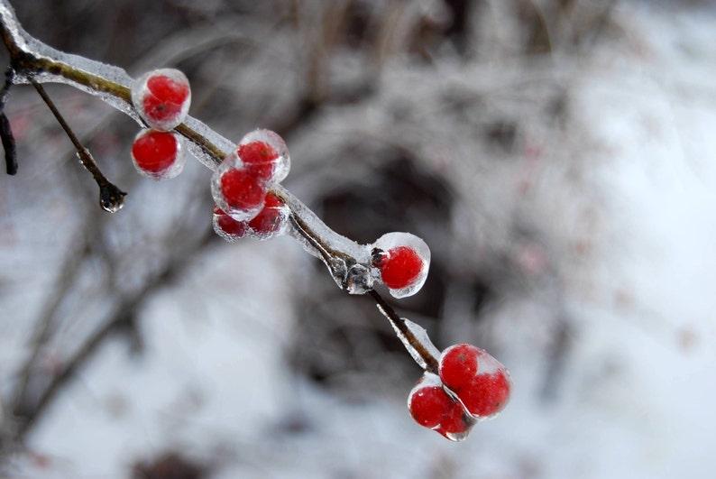 Frozen Ice Berries Winter Photography Digital Download Etsy