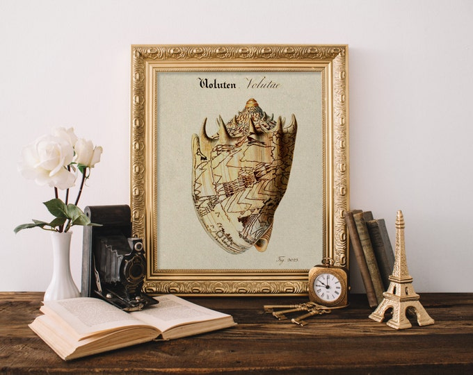 VINTAGE SEASHELL PRINT Digital Print The Shell Cabinet Print Beach Art Print Volute Conch Large Sea Shell Digital Beach Decor Shell Digital