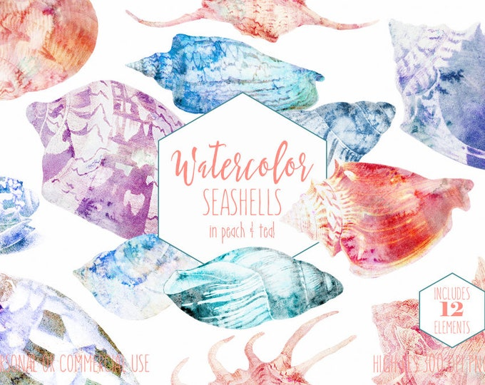 WATERCOLOR SEA SHELLS Clipart Commercial Use Clip Art Seashells Peach Coral Teal Blue Beach Shells Ocean Tropical Island Digital Graphics