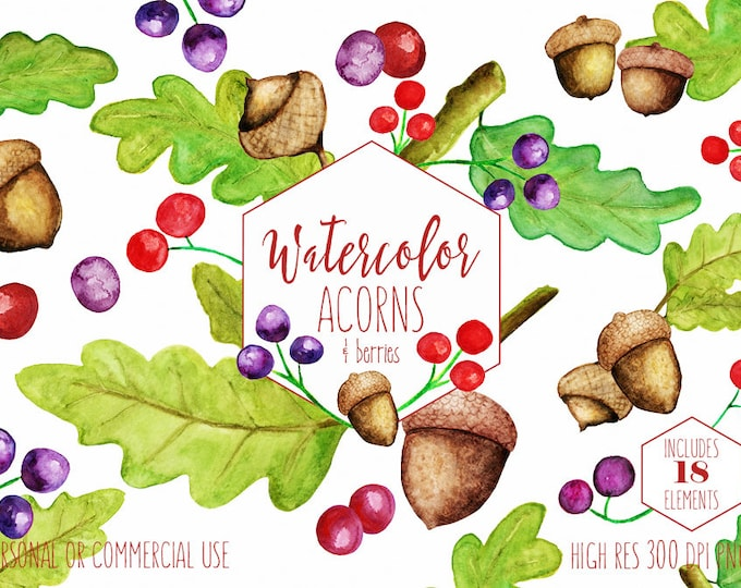 WATERCOLOR ACORNS Clipart Commercial Use Clip Art Autumn Fall Woodland Nature Forest Berries Hand Drawn Watercolour Oak Leaf Leaves Graphics