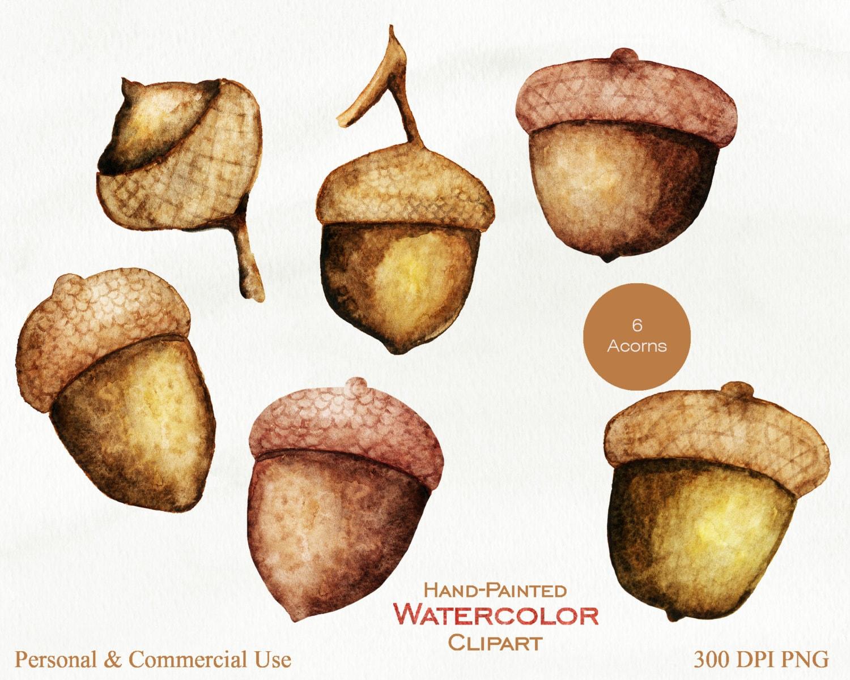 WATERCOLOR ACORNS Clipart Commercial Use Clip Art Autumn ...