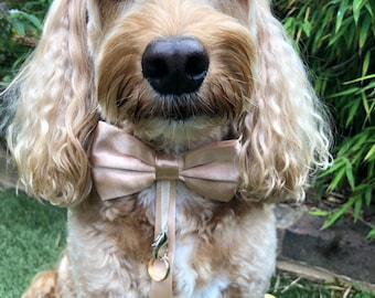 Dog Bow Tie Ring Bearer Collar, wedding, proposal, occasion