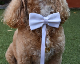 Dog Wedding Collar