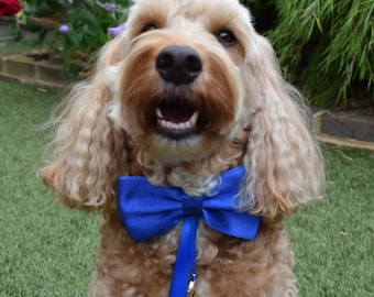 Blue Dog Ring Bearer Collar - Weddings & Proposals