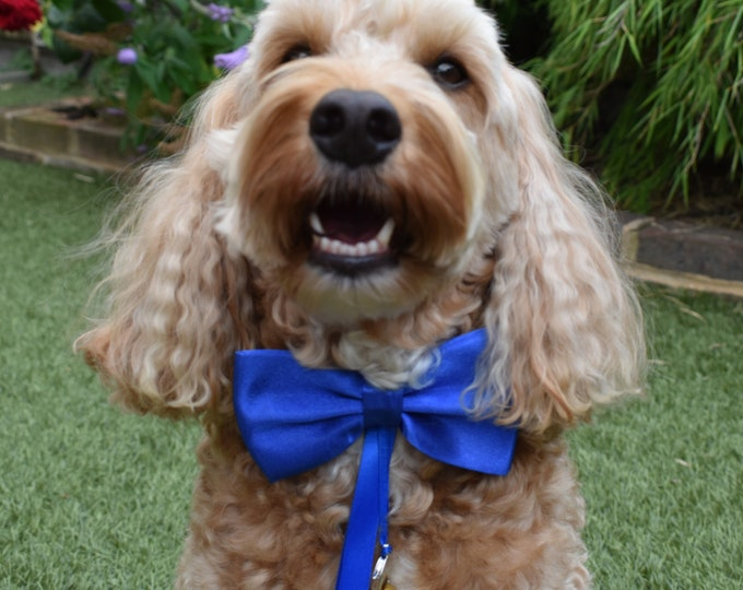 Dog Ring Bearer/Proposal Royal Blue Bow Tie and Collar, Wedding Dog Collar, Pet Collars, dog bow tie, pets at weddings, engagement, proposal