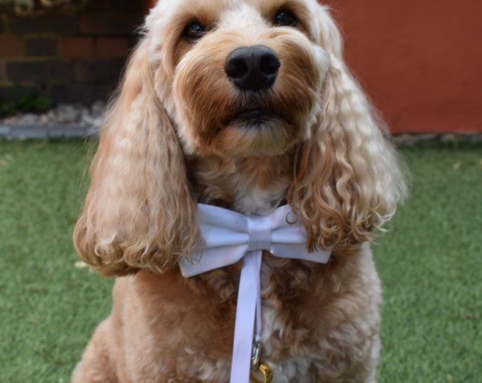 Dog Ring Bearer Collar in White - Weddings and Proposals