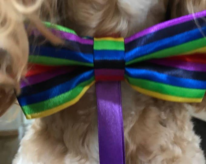 Dog Ring Bearer Collar - Rainbow - Weddings & Proposals
