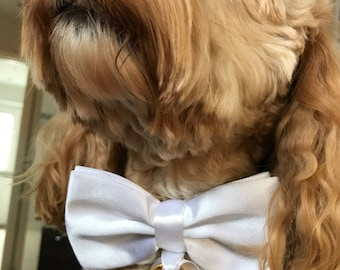 Dog Ring Bearer Collar for Weddings and Proposals