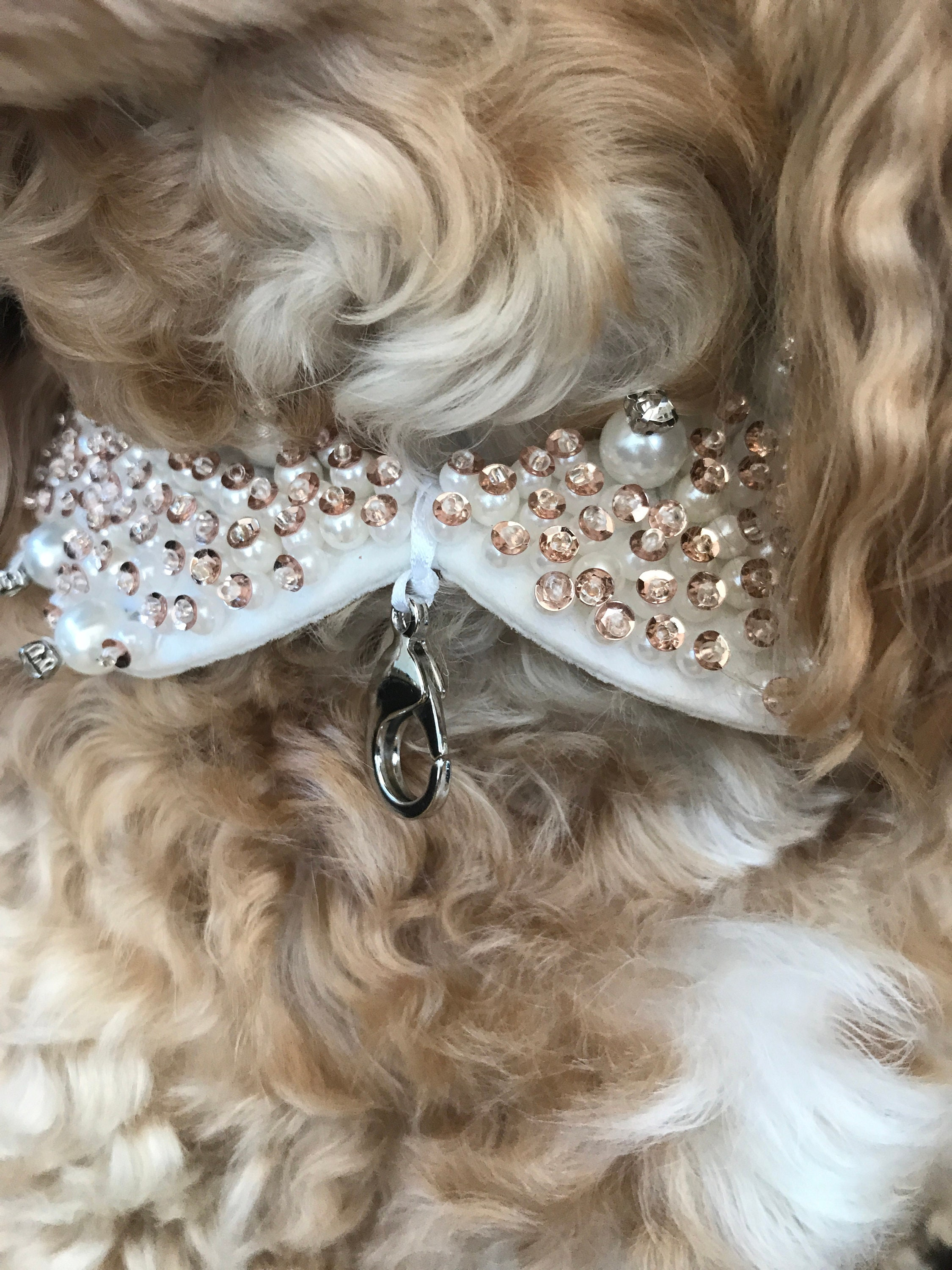 Ivory Pearl Studded Dog Collar Ring Bearer Wedding Dog Collar