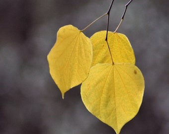 Fall elegance