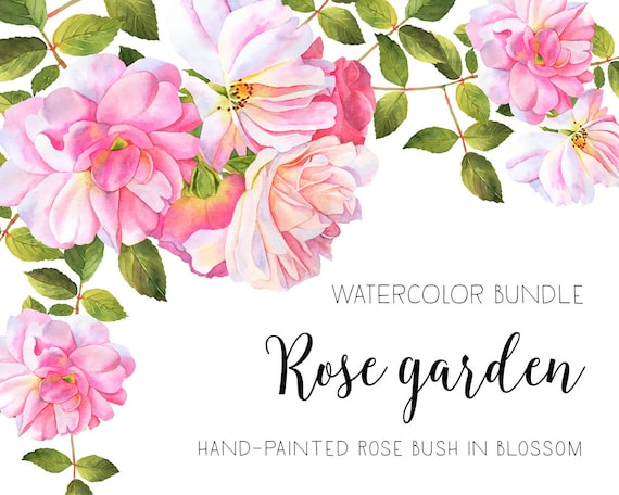roses watercolor clipart flower clipart watercolor roses etsy