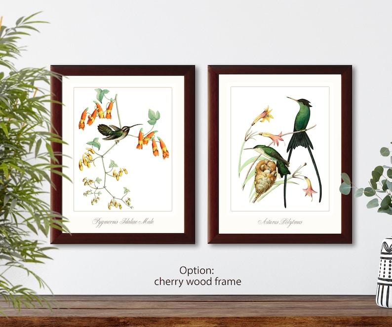 Hummingbirds french vintage illustration set of 2 giclee art print #1-2 natural history prints