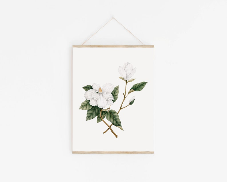 Fleur Magnolia poster  Illustration Botanical  Art Print image 0