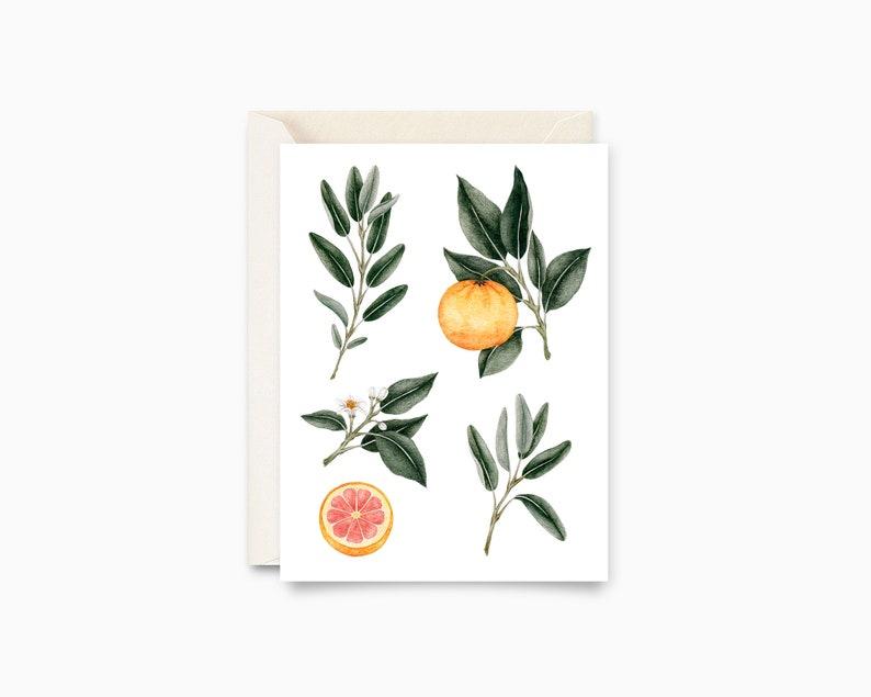 Sage and grapefruit  botanical Illustration  greeting card image 0