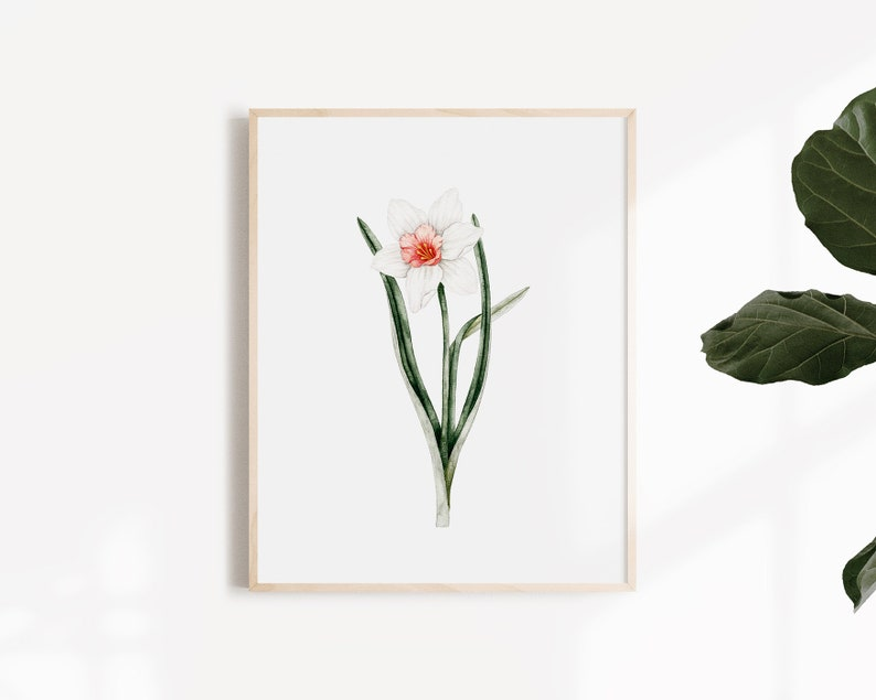 Fleur Jonquille  botanical Illustration  Art Print image 0