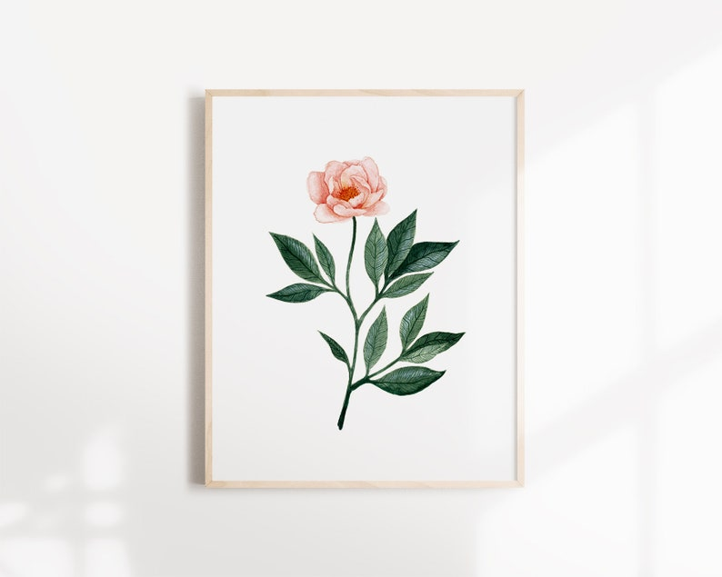 Botanical illustration Peony flower Art Print image 0