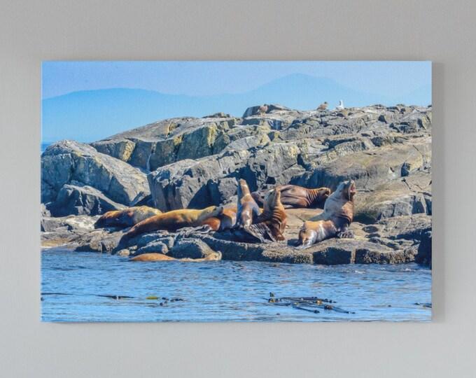 Sea Lion Wall Art