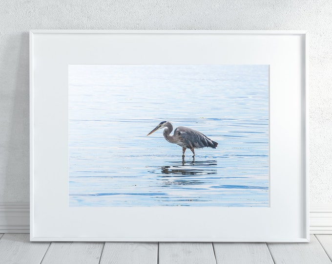 Bird Photography Print