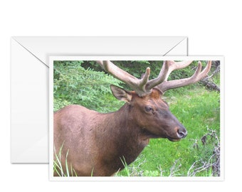 Blank Elk Greeting Card
