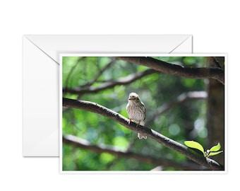 Blank Bird Card
