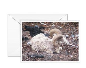 Blank Sheep Greeting Card