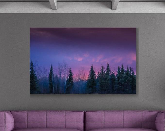 Evergreen Tree Canvas Print