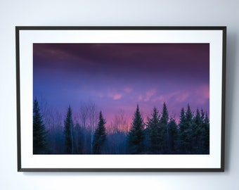 Misty Forest Photography Print