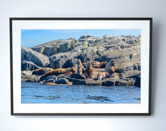 Sea Lion Photography Print