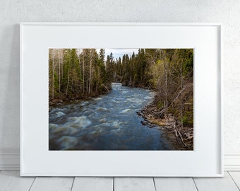 Woodland Photography Print