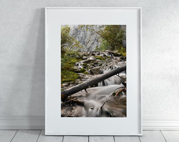 Forest Stream Wall Art