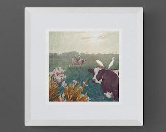 "Cattle Egret - 10""x10"" Giclee Fine Art Print"