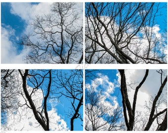 Digital Photography, Abstract Skies, Photo Series, 4 Photographs, Tree Branches, Clouds, Abstract,  5x7, 8.5x11, 11x14, Fine Arts,