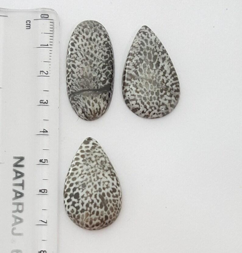 Black Fossil Coral Cabochon