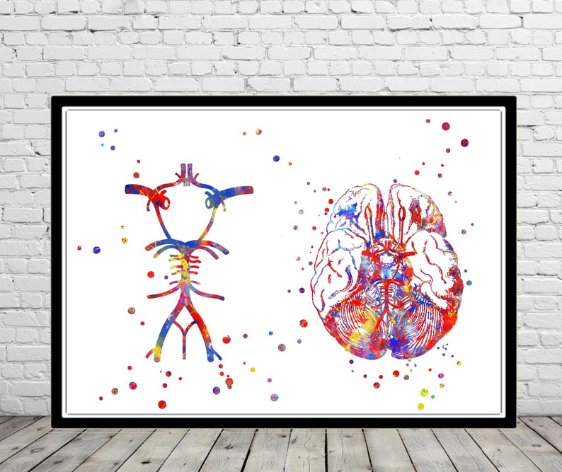 Circle Of Willis Brain Anatomy Medical Art Watercolor Etsy