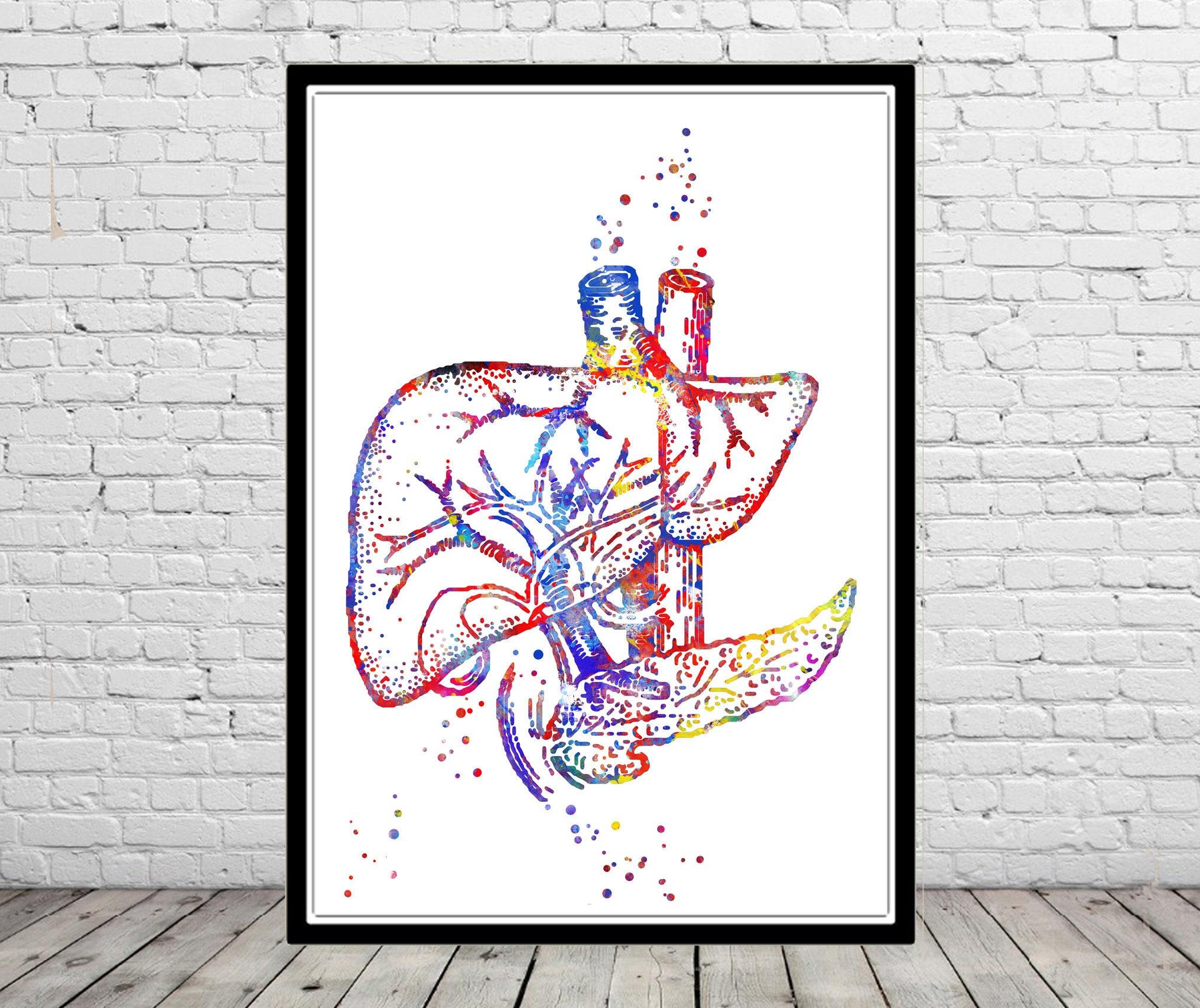 Leber menschliche Organe Leber Kunst Leber Anatomie | Etsy