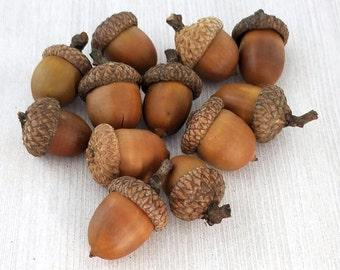 LARGE Acorns Natural Real Acorns Rustic Decor Thanksgiving Decorations Large Acorns Fall Decor Fall Crafts -  12, 25 or 50 acorns