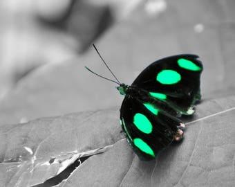 Green Glowing Butterfly, digital downloadable art