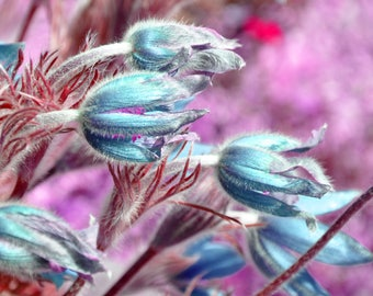 Red and Blue Fuzzy Flowers, digital downloadable art