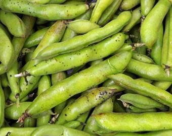 5+ seeds- Heirloom! Egyptian Broad Bean Vicia faba Egyptian Fava Bean