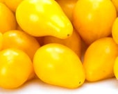 Yellow Pear Tomato Seeds - Save Money on this Unique Heirloom 216