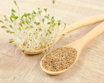 Alfalfa Sprouting seeds You Choose Packet Size easy Microgreens or Sprouts 157H