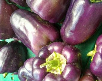 Purple Beauty Sweet Bell Pepper Seeds - Heirloom Non Gmo Rare Vegetable 28