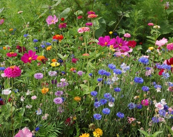 Northeast Wildflower Mix (1000 thru 10 Pound seeds) butterflies bees annual ST04