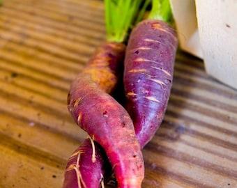 Cosmic Purple Carrot Seeds - Heirloom Open Pollinated - 168C