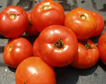 Tomato Marglobe (200 thru 1 oz seeds) Save on a Proven Heirloom. Best Price #217