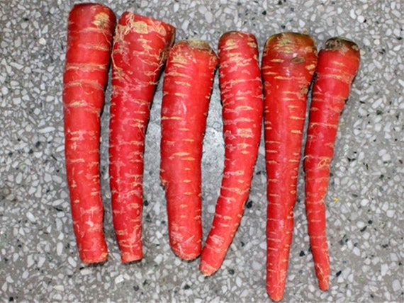 Zanahoria Roja Atomica 100 Semillas 1 10 Gramos Comprar Etsy Aqui les traigo otra deliciosa y simple receta, zanahorias y manzana roja asadas en el horno con canela. etsy