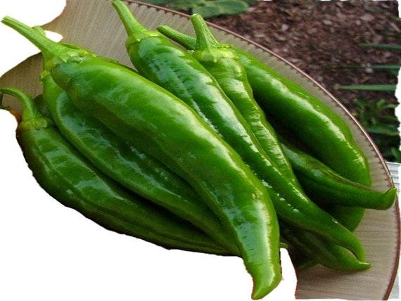 200 Anaheim Mild Hot Chili Pepper Seeds w// Gift