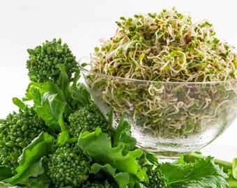 Broccoli Rapini (250 through 2 LB seeds) Autumn & Winter Window Raab Greens! 117